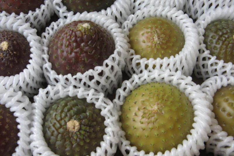 Rumpa se inscribe como un producto gourmet en Limarí