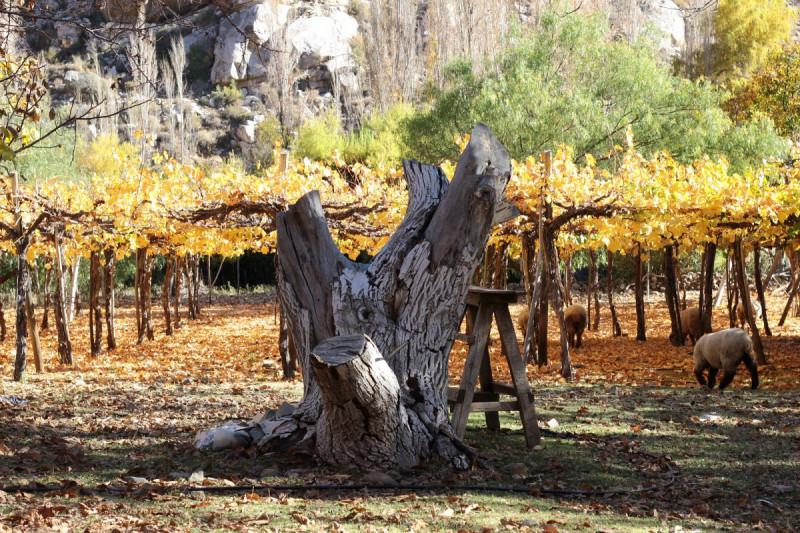 Recorrido por el Valle del Río Mostazal, el paraíso que oculta Monte Patria