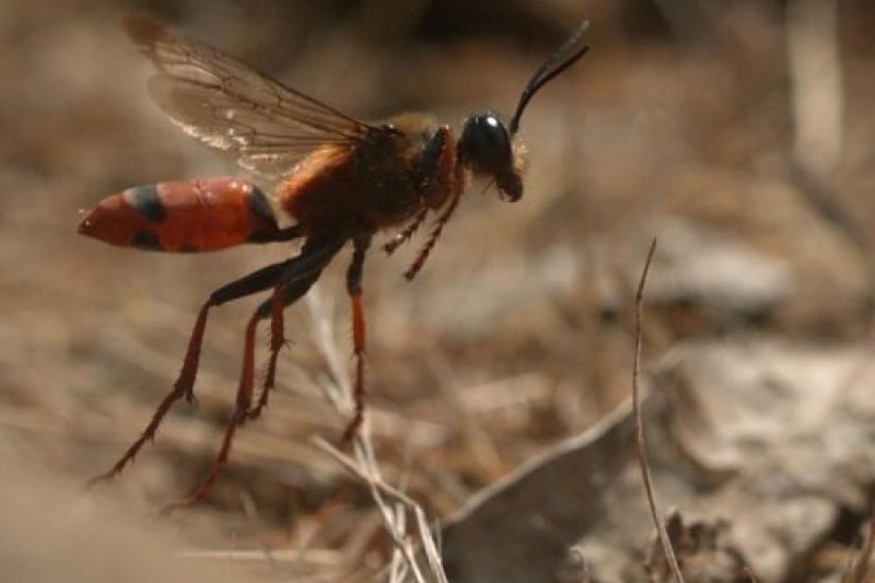 Serie ovallina sobre insectos llega  a la TV